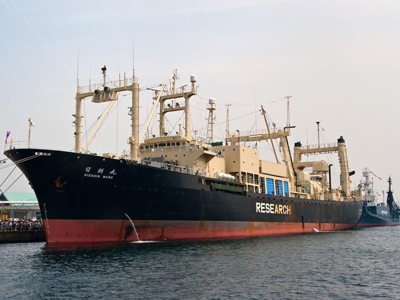 調査捕鯨船